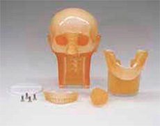 Dental Radiography Head Phantom - PH-47 - Kyoto Kagaku